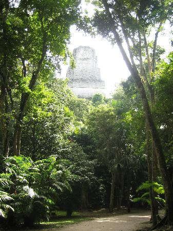 Tikal in the jungle.