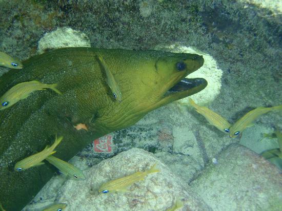 Belize Tradewinds Paradise Villas: green eel