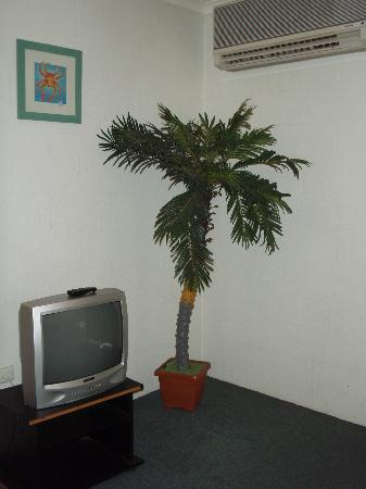 Alatai Holiday Apartments : Rather tacky fake palm tree in the living area!