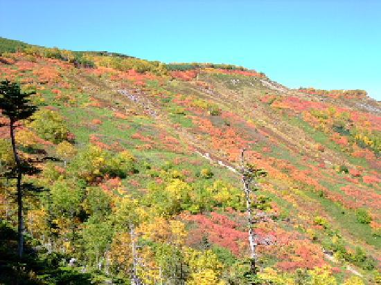 赤岳銀泉台, 日本一早い紅葉です。