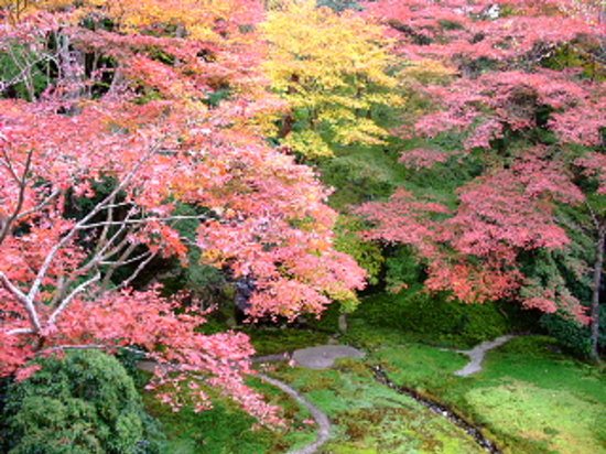 Sakyo, Japan: 瑠璃光院