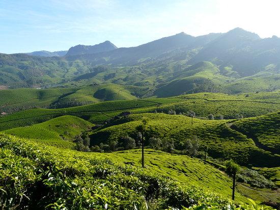 Μουνάρ, Ινδία: Munnar - Tea Gardens