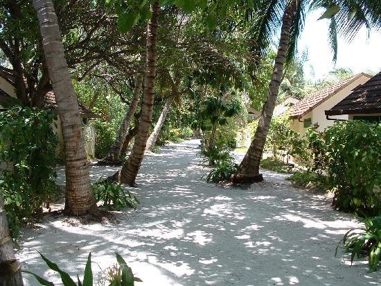 Anantara Dhigu MaldivesResort: allee centrale de l'ile dhigu