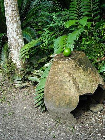 Jamaica: old pottery at Cranbrook