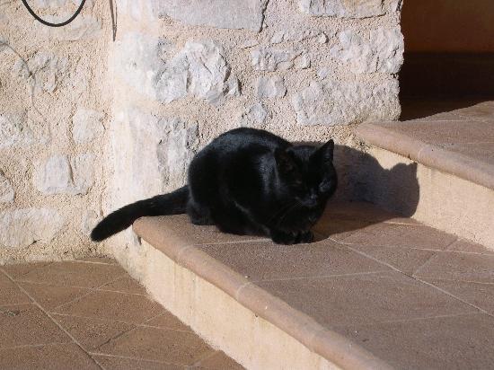 Il Casale degli Amici: La Micia nera