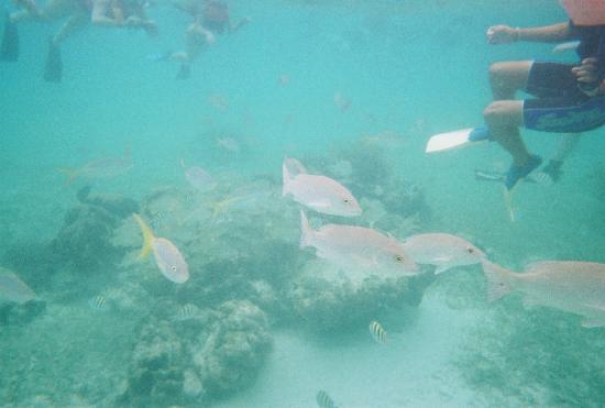 The Original Snorkeling Adventure: Snorkeling at snorkel adventure