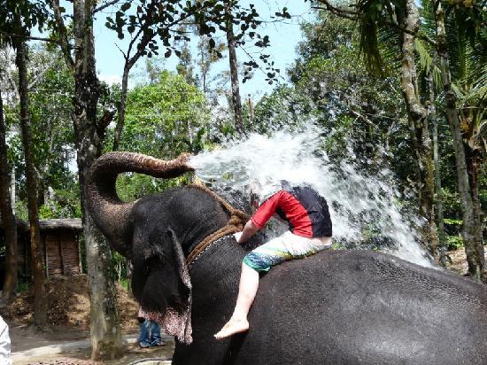 Guruvayur - Punnathur Kotta