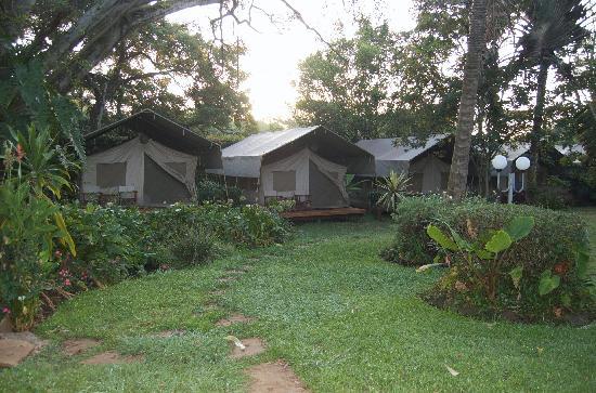 Wildebeest Eco Camp: Lovely tents