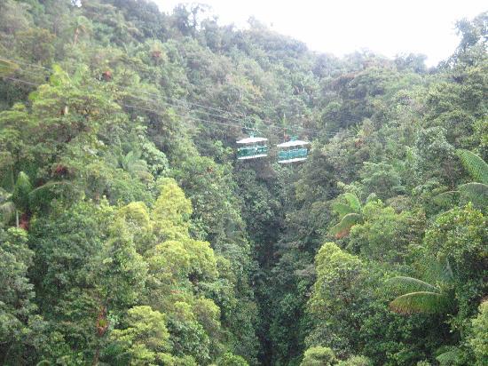 Dominica Aerial Tramway : View of Trams from Aerial Footbridge