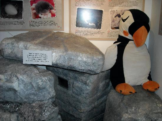 Project Puffin Visitor Center : Back room at the PPVC