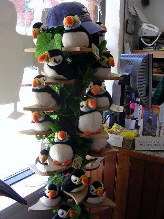 Project Puffin Visitor Center : The plush puffins make real puffin noises