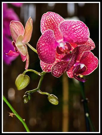 Jardín de Orquídeas de Sitio Litre: Foto de Lluís Sànchez