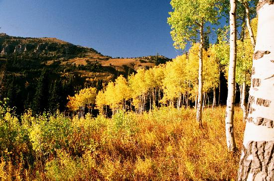 Fox Creek Inn: Aspen Grove