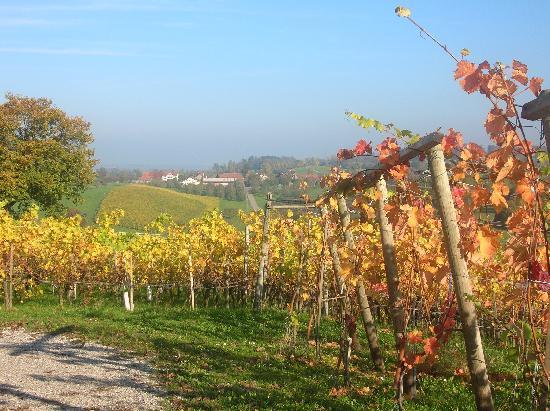 Canton of Thurgau, Switzerland: Im Hintergrund Buchackern