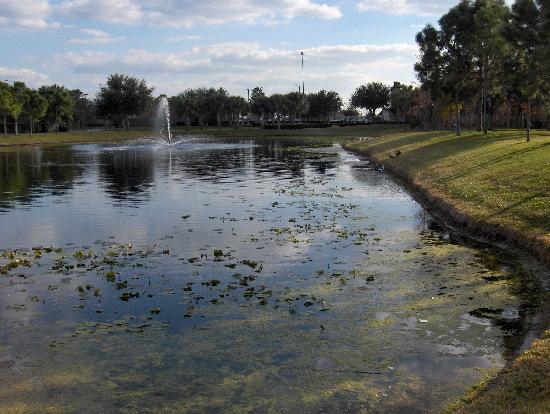 La Quinta Inn & Suites Sarasota I-75: Pond adjacent to hotel