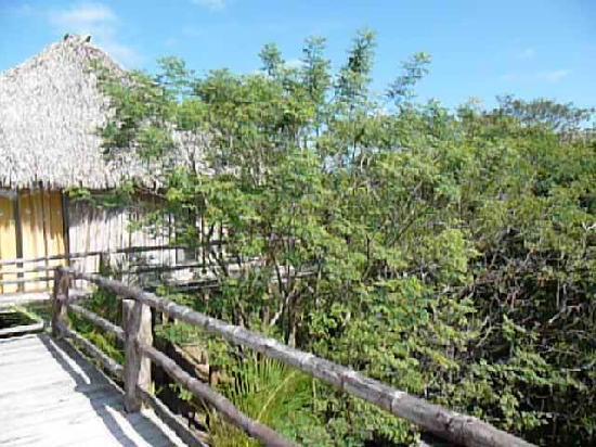 Empalme a Las Playas: cabana overlooking canopy of jungle