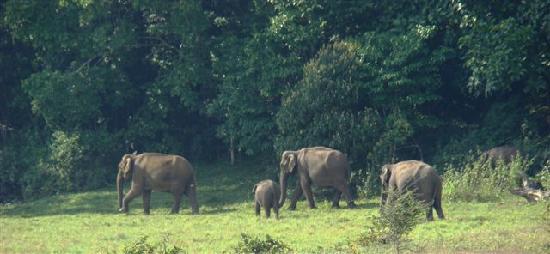 Thekkady, India: Elephants on our trek path