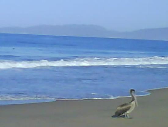Villa Don Manuel: La playa con el pelícano..
