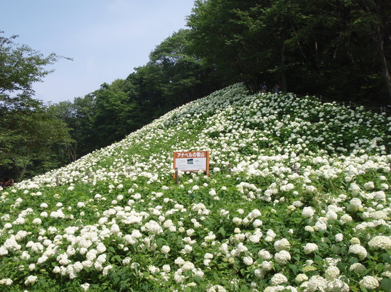 Tokyo Summer Land: アナベルの雪山