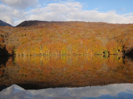 Towada, Japan: 黄金に輝く紅葉の蔦沼