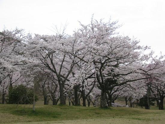Sakura no Sato
