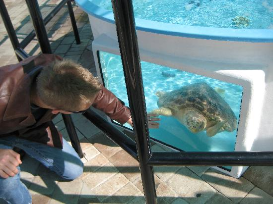 Loggerhead Marinelife Center : checking out the turtle up close..