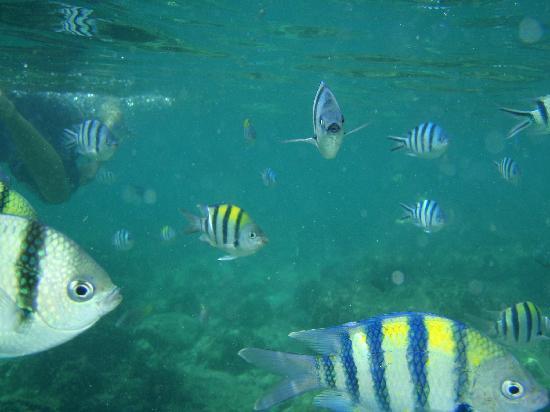 El Nido Resorts Lagen Island: fishie!