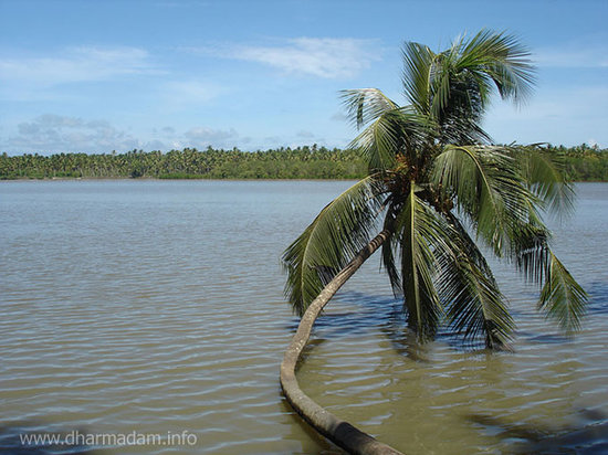 Kannur, India: Coconut Tree on River side