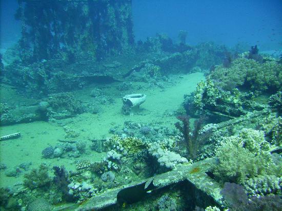 Camel Dive Club & Hotel : Yolanda