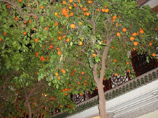 Riad Daria: innenhof mit orangenbäumen