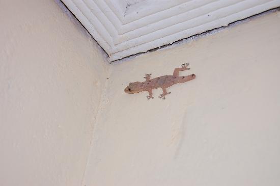 Hotel Ibis : A room pet!
