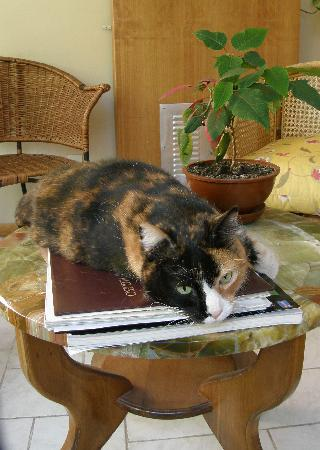 Hotel Lady Florence Dixie: Clementina the calico cat