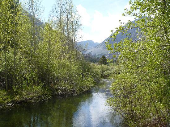 Lake View Lodge: a beautiful creek near lee vining
