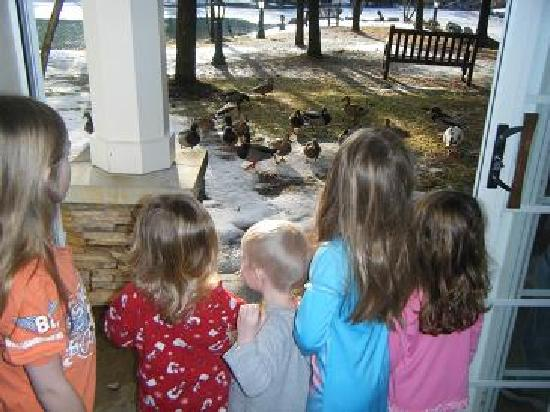 Cherry Valley Lodge: Kids feeding the ducks outside the hotel room, near the pond.