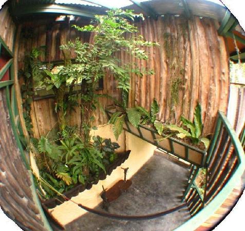 TreeTop House: Arboretum type area between two levels