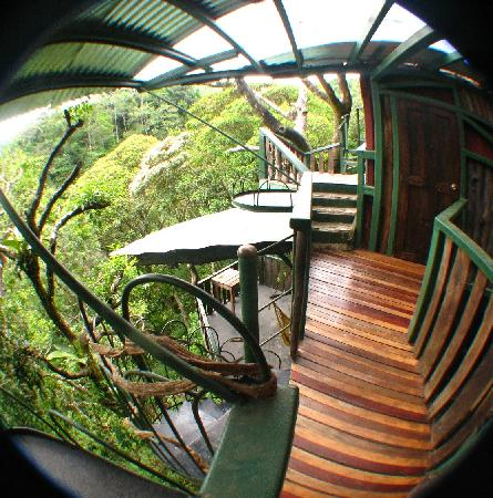 TreeTop House: view of various levels from back/outside