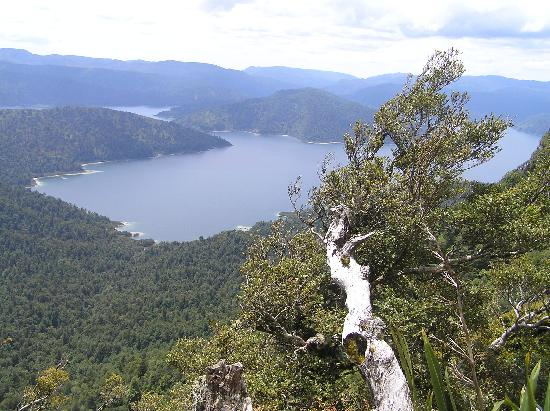 Te Urewera National Park: Looking down at the lake from Panekiri Bluff