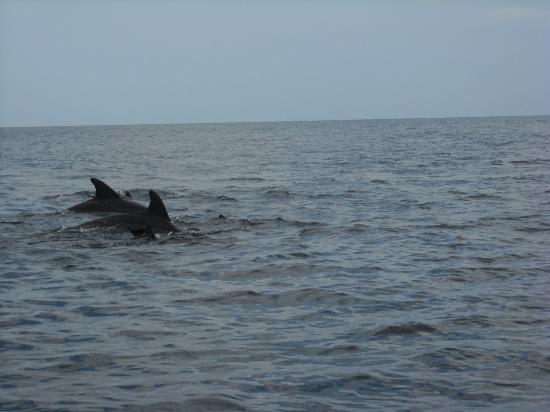 Eden Village Watamu Beach: i delfini al blu safari