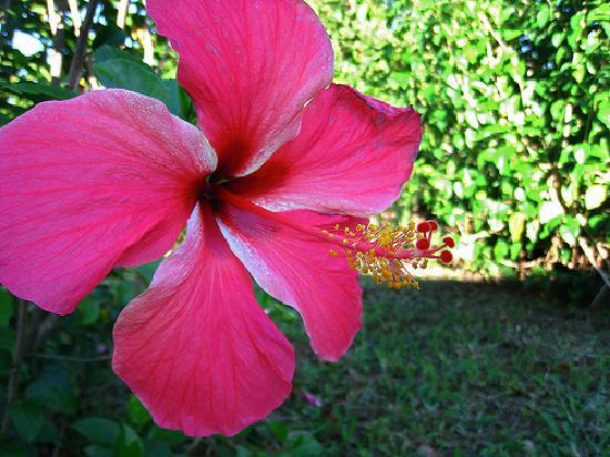 El Encanto: Flowers on Property