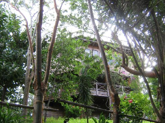Roatan Bed & Breakfast Apartments: Hotel in the green