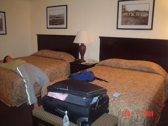 BEST WESTERN Danville Sycamore Inn: 2 very comfy bed