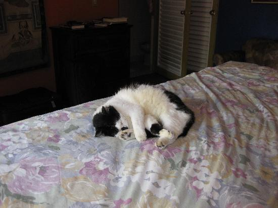 Casa Condesa: Carmela, the house cat, loved our bed!