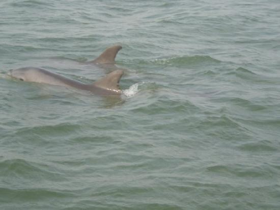 Sun Deck Inn & Suites: We went on the Beachcomber Tour and saw tons of dolphins!  The owners of this boat were simply a