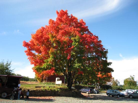 Mattapoisett, MA: Fall Foliage