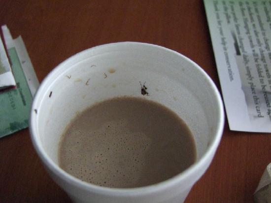 Glendale, CA: quel bon café!