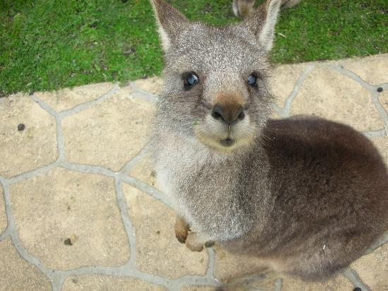 Cowes, ออสเตรเลีย: うさぎ?ですかね・・・