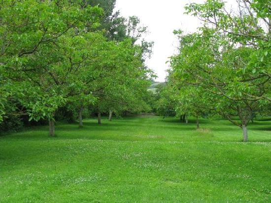 Bosc Lebat : orchard