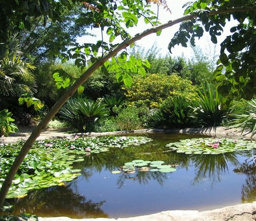 Gentil San Diego Botanic Garden (Encinitas)   All You Need To Know Before You Go  (with Photos)   TripAdvisor