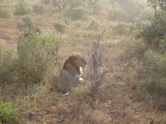 Jacaranda Beach Resort: abbiamo visto anche il leone