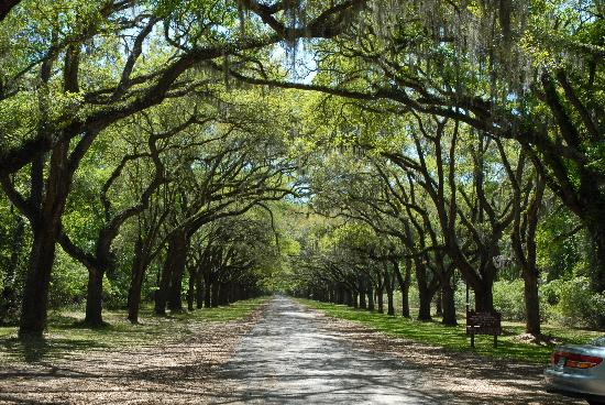 Wormsloe Historic Site : Wormsloe  Plantation (the drive) i Savannah